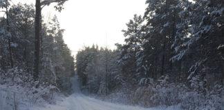 Vinterhälsningar från Finnskoga-skogen